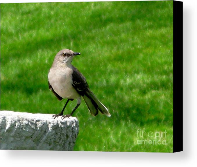 Bird Canvas Print featuring the photograph Pause To Reflect by PJ Cloud