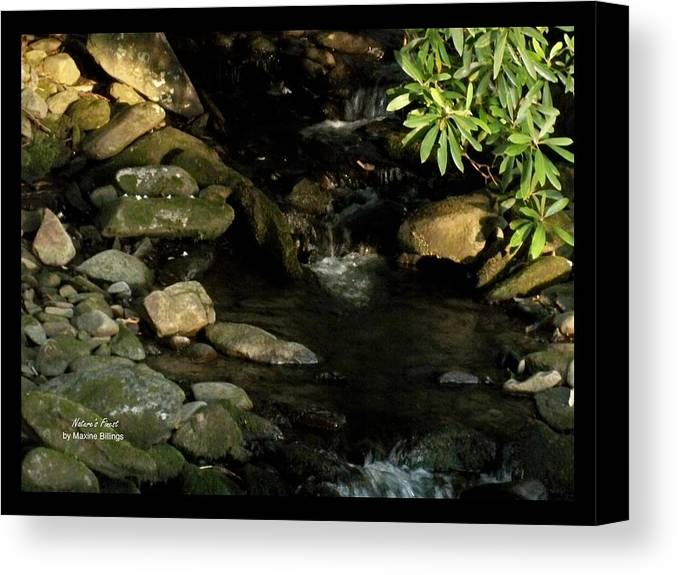 Water Canvas Print featuring the photograph Peace And Security by Maxine Billings