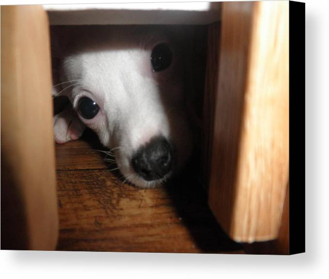 Puppy Canvas Print featuring the photograph Peek A Boo by Camille Reichardt