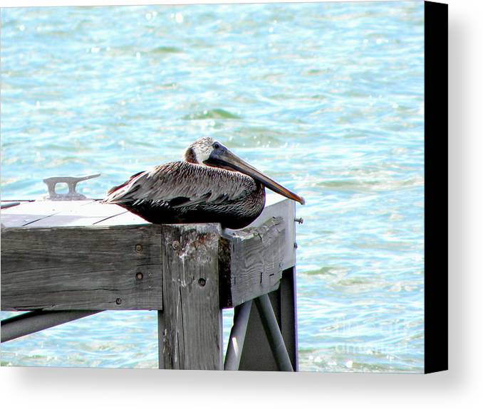 Pelican Canvas Print featuring the photograph Pelican Resting by Terri Mills