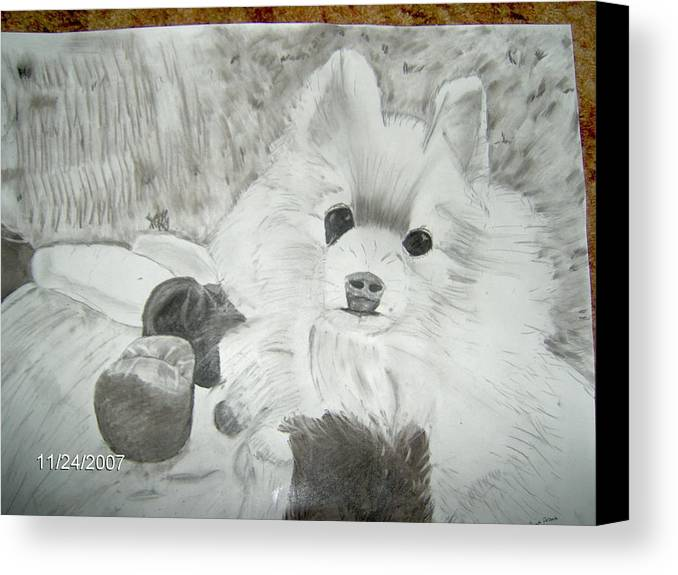 Dog Canvas Print featuring the drawing Pepe by Tina Brown