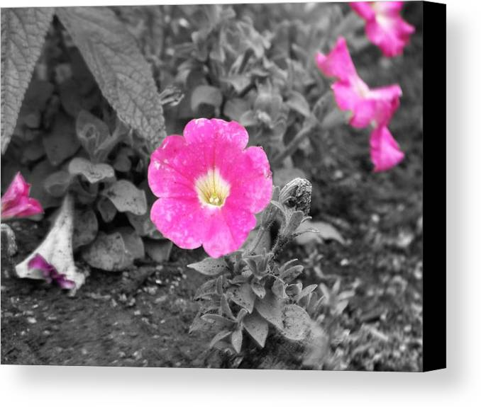 Flowers Canvas Print featuring the photograph Pink by Jessica Burgett