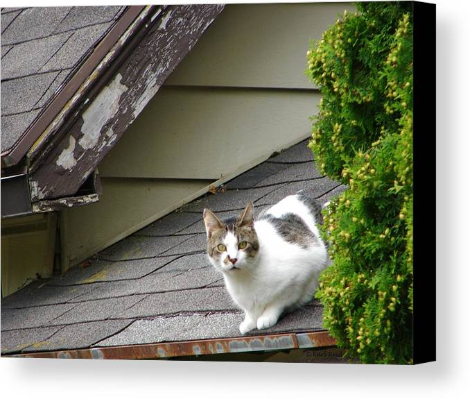 Cat Canvas Print featuring the photograph Precariously Perched Pussy by Karl Reid