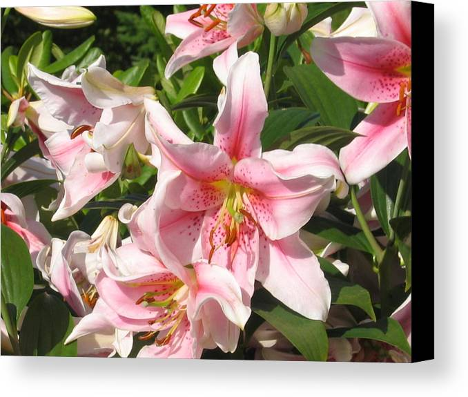 Canvas Print featuring the digital art Prettier In Pink by Barb Morton