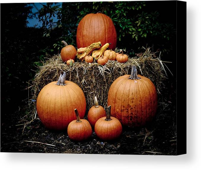 Pumpkin Canvas Print featuring the photograph Pumpkins In The Dark by Jim DeLillo
