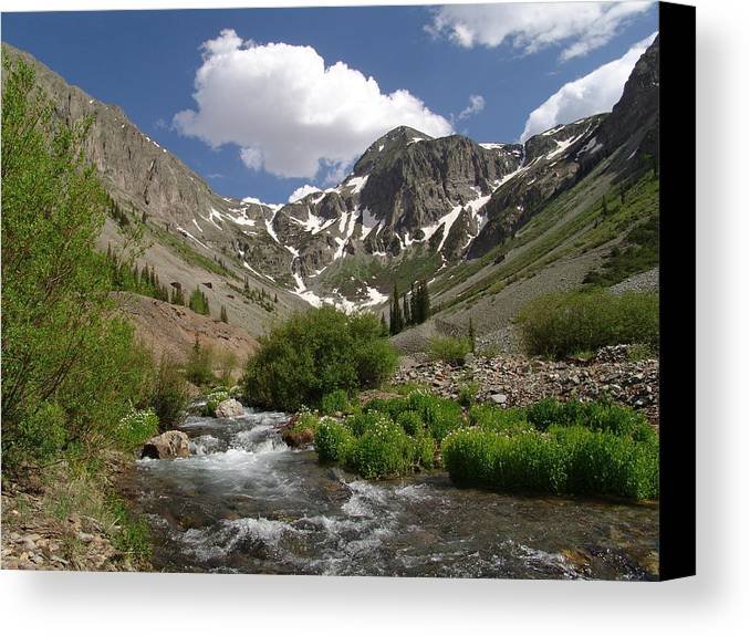 Trees Canvas Print featuring the photograph Pure Mountain Beauty by Carol Milisen