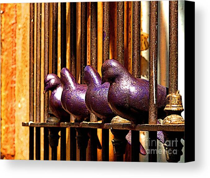 Tlaquepaque Canvas Print featuring the photograph Purple Doves 1 by Mexicolors Art Photography