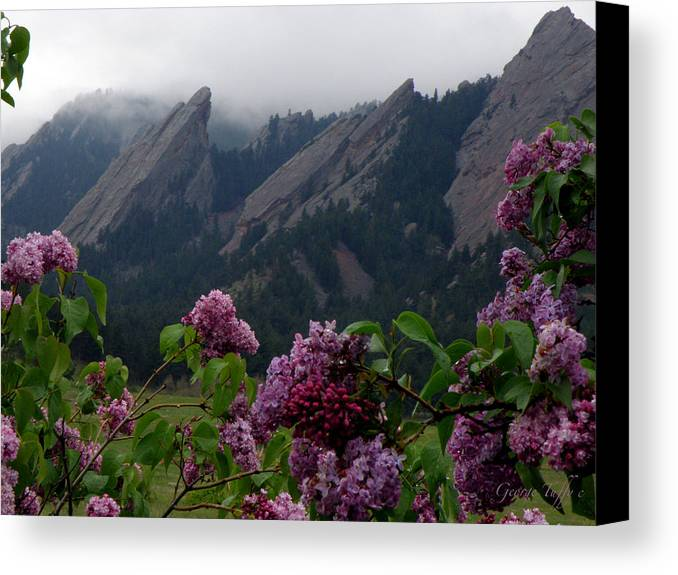 Landscapes Flatirons Lilacs Flowers Spring Misty Rain Boulder Colorado Canvas Print featuring the photograph Purple Lilacs Flatirons by George Tuffy
