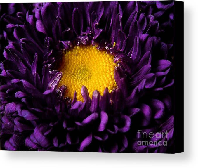 Nature Canvas Print featuring the photograph Purples - Zooming To The Center by Lucyna A M Green