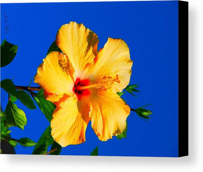 Flower Canvas Print featuring the photograph Reaching For The Sky by Judy Waller