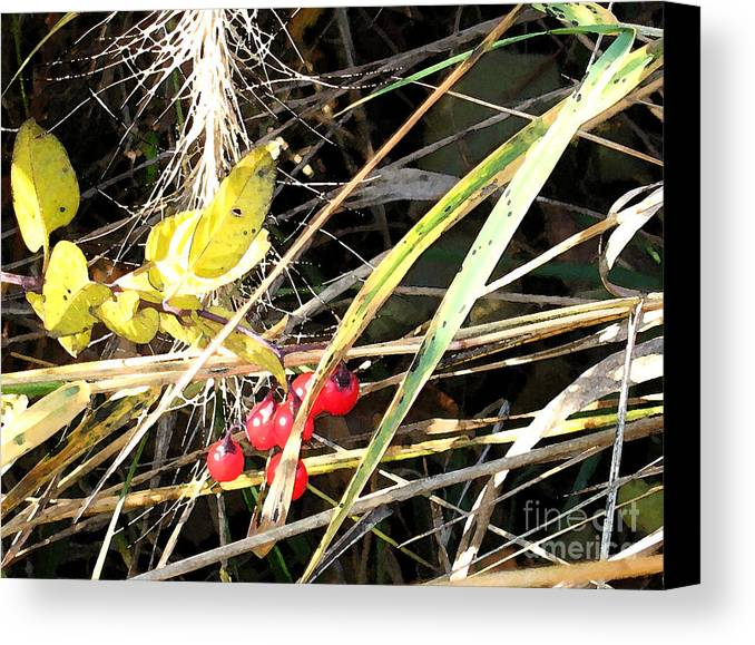 Berries Canvas Print featuring the photograph Red Berries by Gary Everson