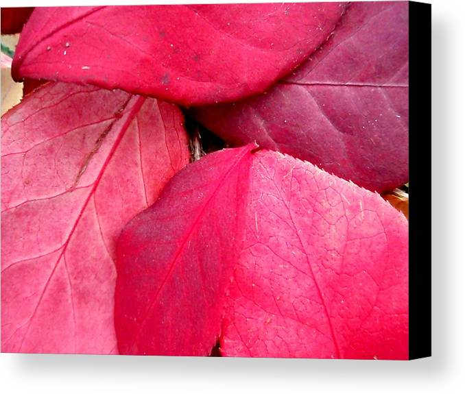 Red Canvas Print featuring the photograph Red by Beth Akerman