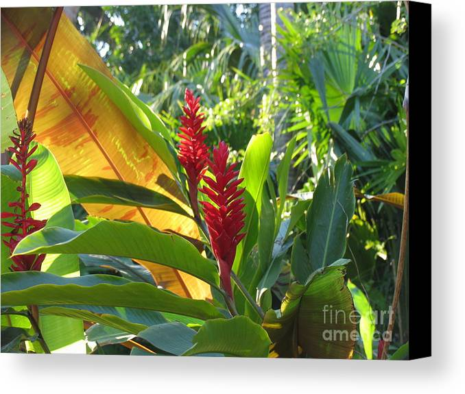 Red Canvas Print featuring the photograph Red Ginger by Stephanie Richards