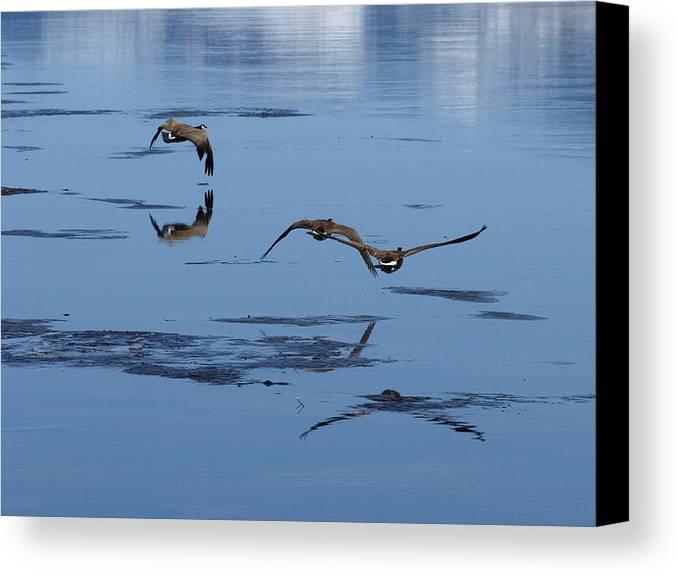 Birds Canvas Print featuring the photograph Reflecting Geese by DeeLon Merritt