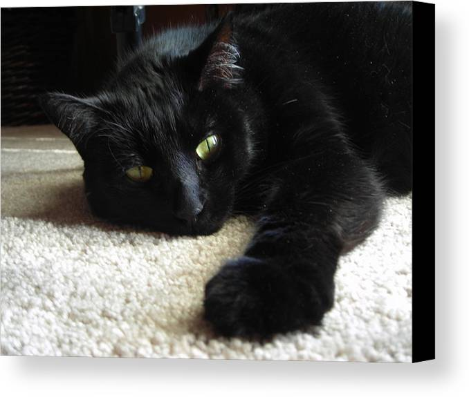 Cats Canvas Print featuring the photograph Relaxing by Trishia Gibson
