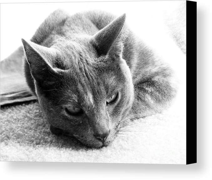Cats Canvas Print featuring the photograph Resting by Amanda Barcon