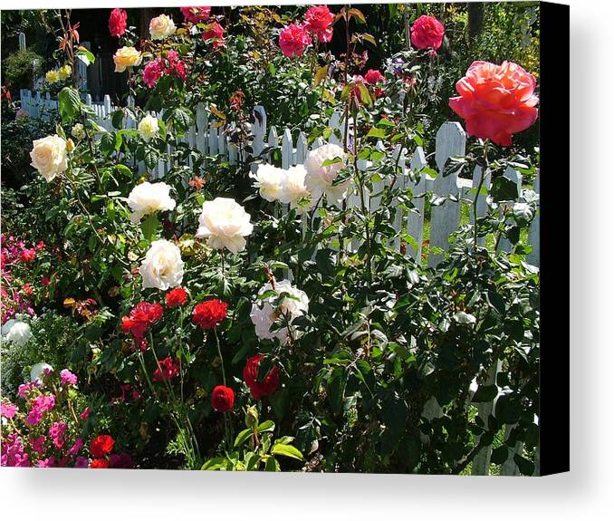 Cottage Canvas Print featuring the photograph Roses In Red And White by John Loyd Rushing