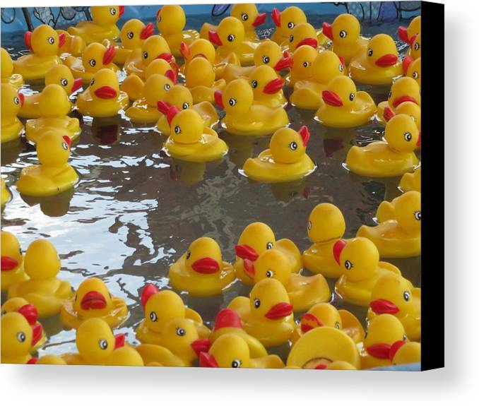 Rubber Ducks Canvas Print featuring the photograph Rubber Duckies by Cindy Kellogg