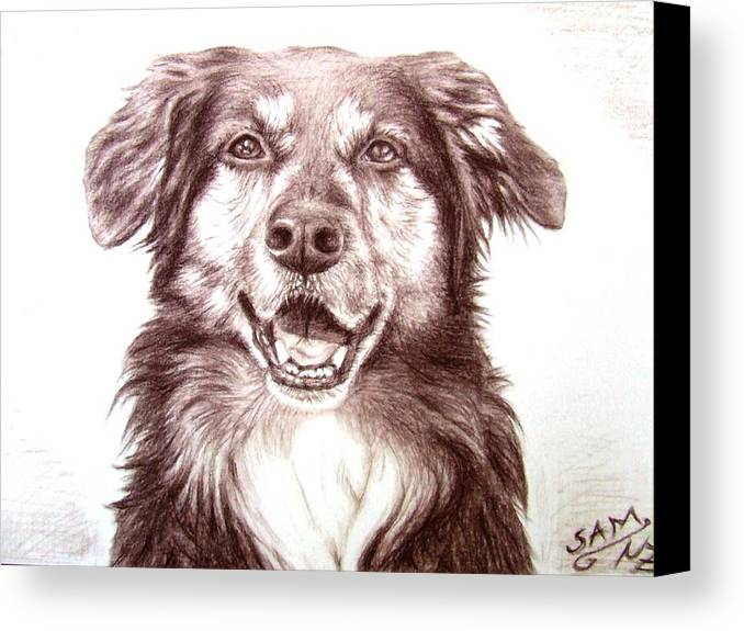 Dog Canvas Print featuring the drawing Sam by Nicole Zeug