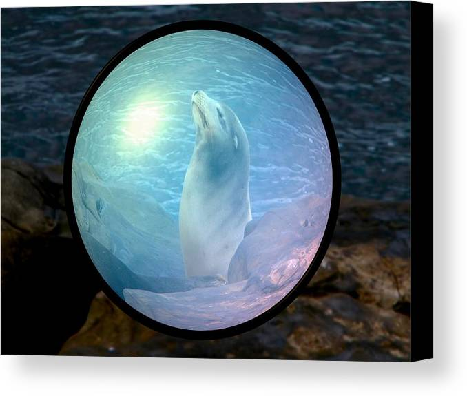 Natural Canvas Print featuring the photograph Seal by Guillermo Mason