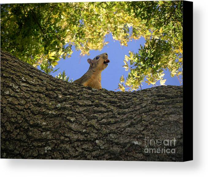 Nature Canvas Print featuring the photograph Show But Not Tell by Lucyna A M Green
