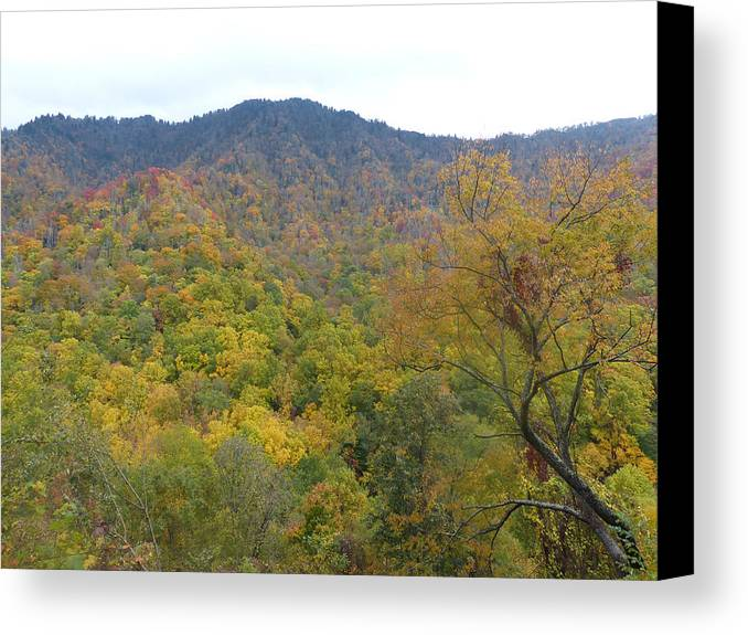 Nature Canvas Print featuring the photograph Smoky Mountains National Park 5 by Cindy McFadden