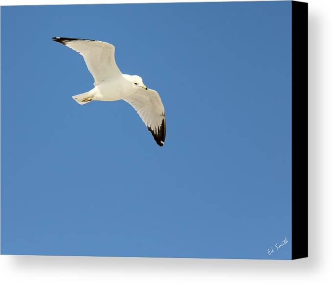 Smooth As Silk Canvas Print featuring the photograph Smooth As Silk by Ed Smith