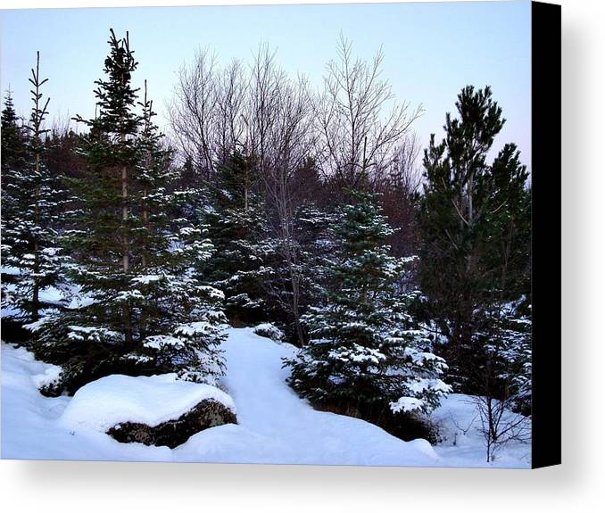 Evergreens And Snow Canvas Print featuring the photograph Snow For Christmas by Marilynne Bull