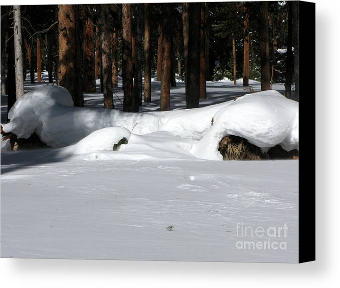 Snow Canvas Print featuring the photograph Snowy Log by PJ Cloud