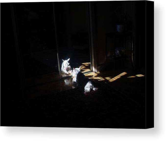 Dog (schnauzer) Canvas Print featuring the photograph Solitude by Dale Augustson