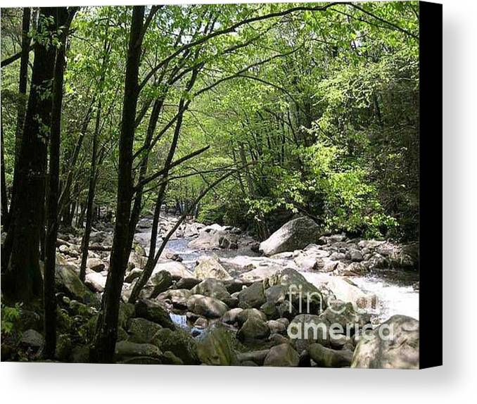 Nature Canvas Print featuring the photograph Springtime In The Smoky Mountains by Barb Montanye Meseroll