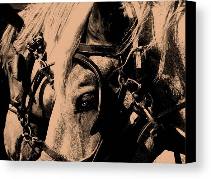 Horse Canvas Print featuring the photograph Stage Coach Horses by Wayne Potrafka