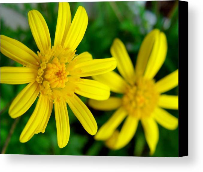 Focus Canvas Print featuring the photograph Stay Focused by Ramona Barnhill