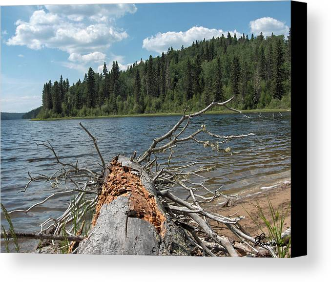 Water Lake Scenery Trees Wood Forest Driftwood Branches Shore Beach Canvas Print featuring the photograph Steepbanks Lake The Fallen by Andrea Lawrence