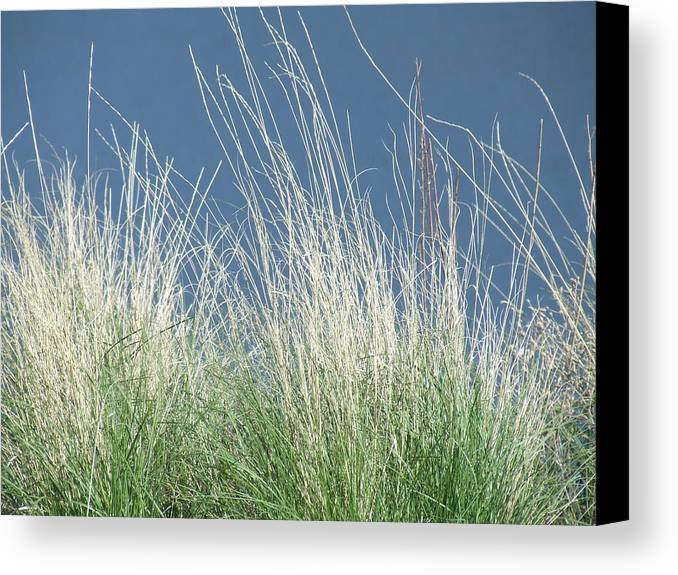 Grass Canvas Print featuring the photograph Study Of Grass by Tiffany Vest