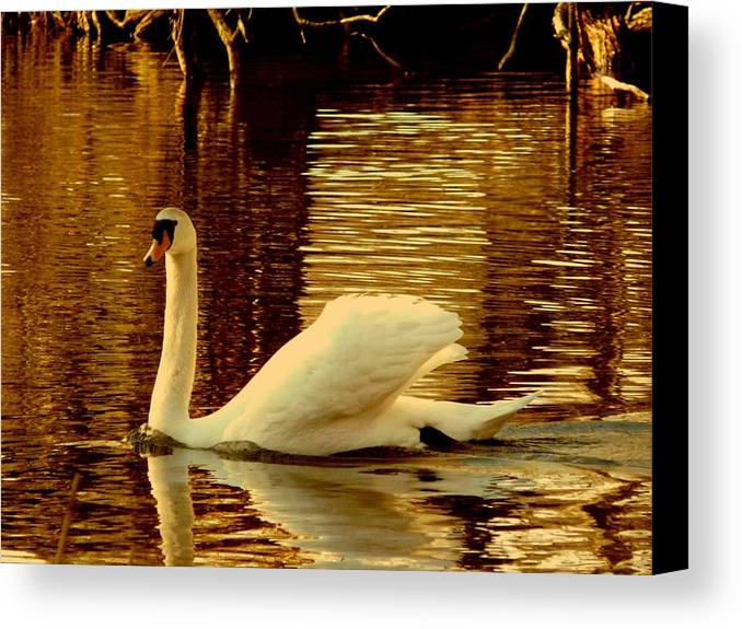 Swan Canvas Print featuring the photograph Swan Dance by Kendall Eutemey