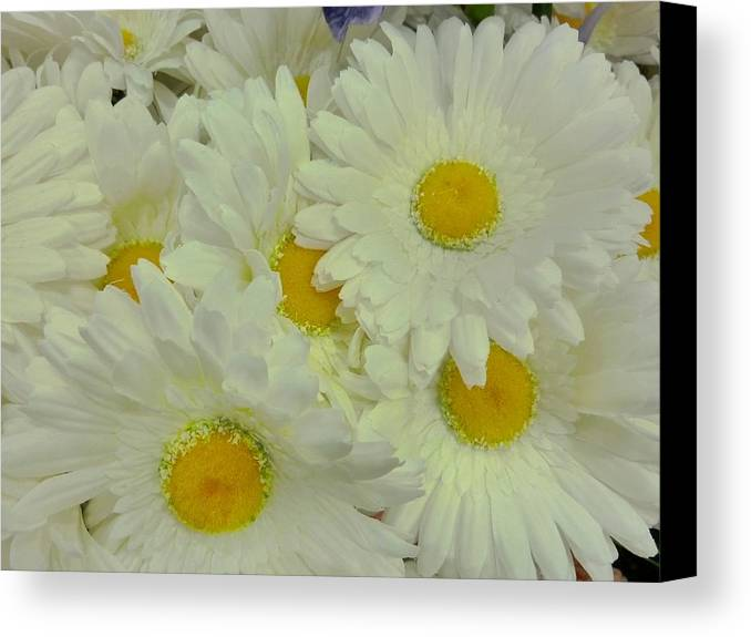 Floral Canvas Print featuring the photograph Sweet Daisy Faces by Florene Welebny