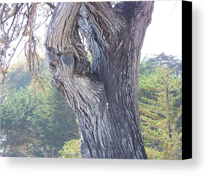 Woodscape Canvas Print featuring the photograph Texture by Maggie Cruser