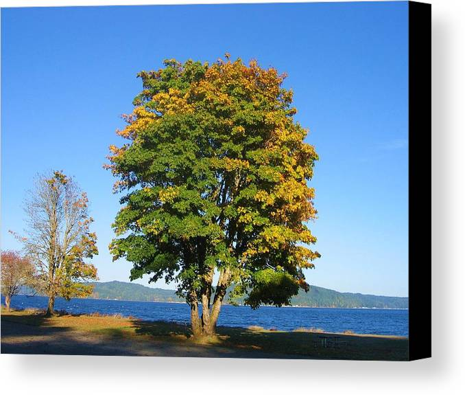Canvas Print featuring the digital art The Autum Leaves by Barb Morton