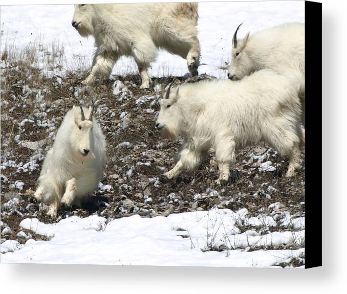 Animals Canvas Print featuring the photograph The Chase by DeeLon Merritt