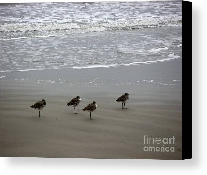 Nature Canvas Print featuring the photograph The Gulf In Shades Of Gray - Do Re Mi And Fa by Lucyna A M Green
