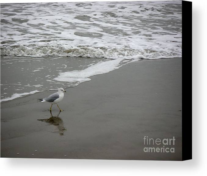 Nature Canvas Print featuring the photograph The Gulf In Shades Of Gray - Strutting by Lucyna A M Green