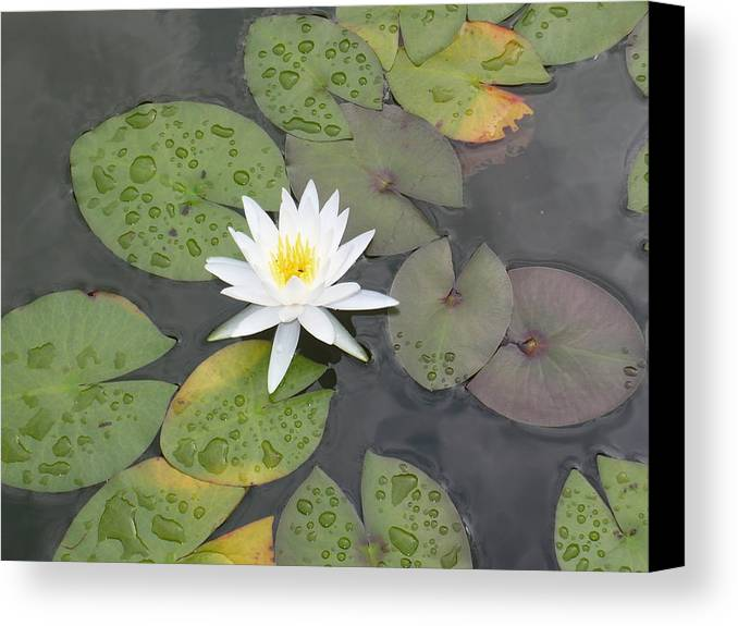 Flower Canvas Print featuring the photograph The Lone Bloom by Jodi Marze Kass