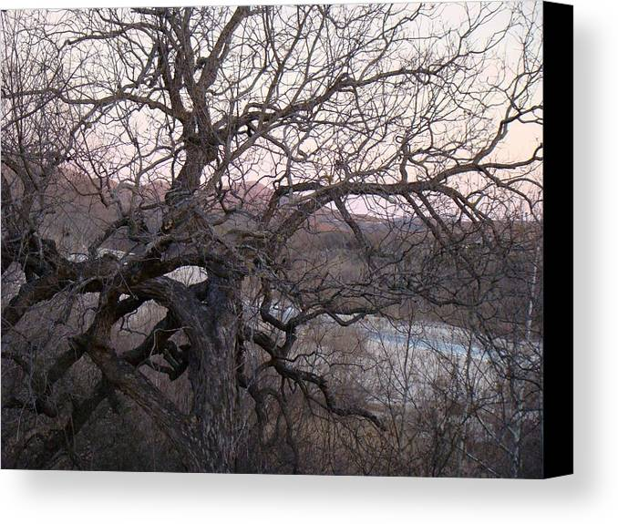 Pecan Tree Canvas Print featuring the photograph The Mother Tree One by Ana Villaronga