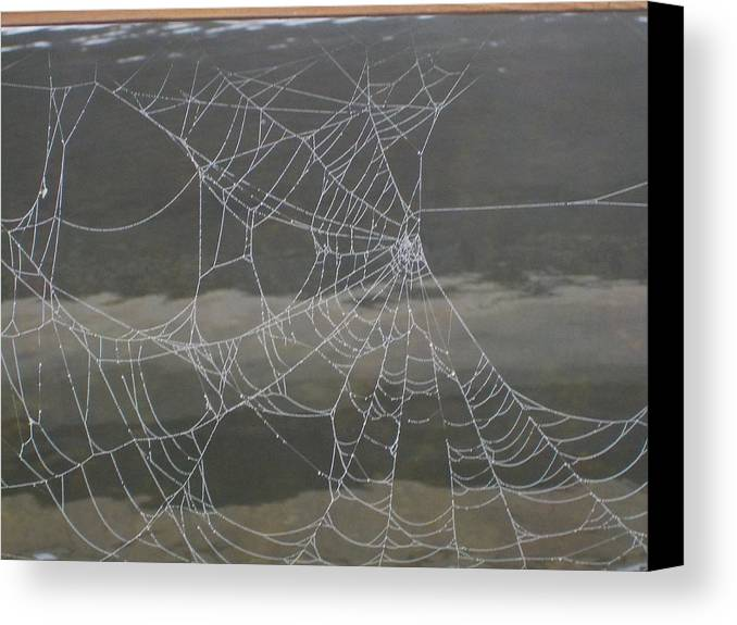 Insects Canvas Print featuring the photograph The Web by Lynn Sobecke
