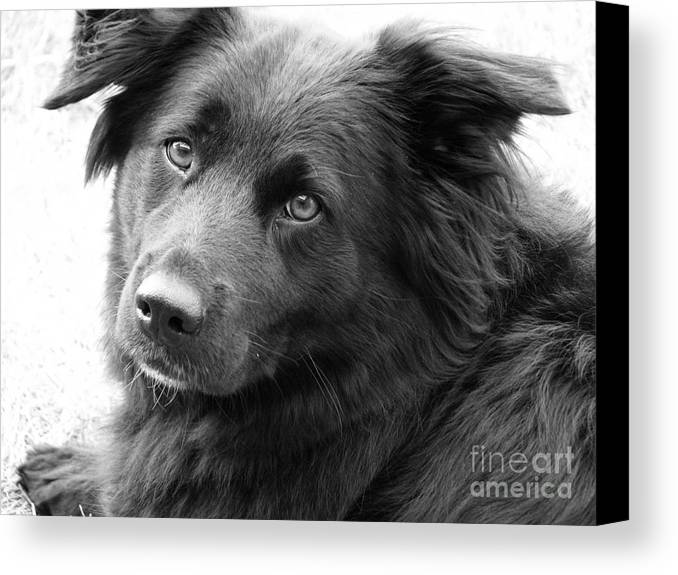 Dog Canvas Print featuring the photograph Thinking by Amanda Barcon