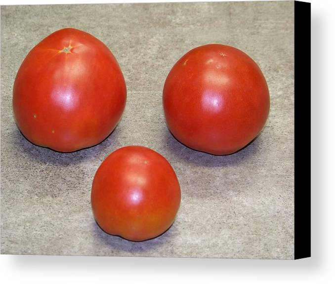 Fruit Canvas Print featuring the photograph Three Red Tomatoes by Paula Coley