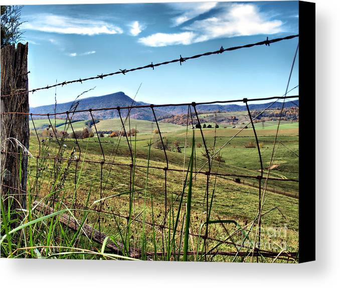 Canvas Print featuring the photograph Through The Fence by Kathy Jennings