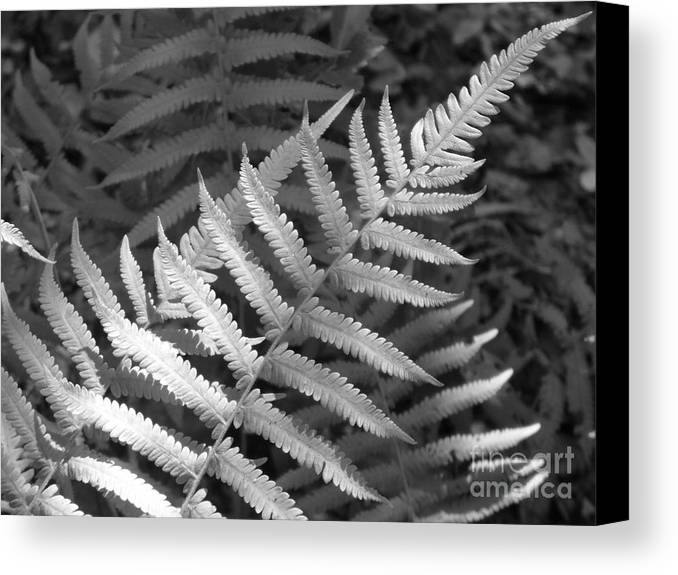 Black And White Canvas Print featuring the photograph Tilted Fern by Stephanie Richards