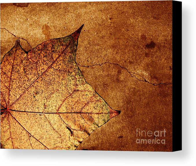Autumn Canvas Print featuring the photograph Today Everything Changes by Dana DiPasquale